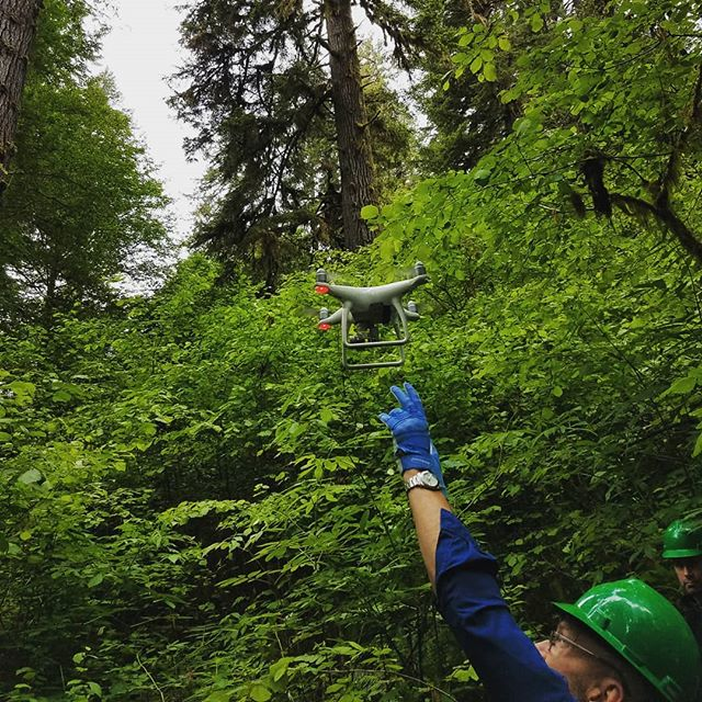 Never a dull moment! Last week we worked with @oceansunmanned to test the ability of drones mounted with @flir infrared cameras to find the body heat signature of a Marbled Murrelet sitting on it's nest. Check out our new Twitter feed -linked on the website- to catch some great footage captured by Oceans Unmanned. 📷 Ethan Woodis  #scienceandtechnology #dronesforscience #dronestagram #flir #infraredtechnology #oeegonmurrelet #marbledmurrelet #oregonforest