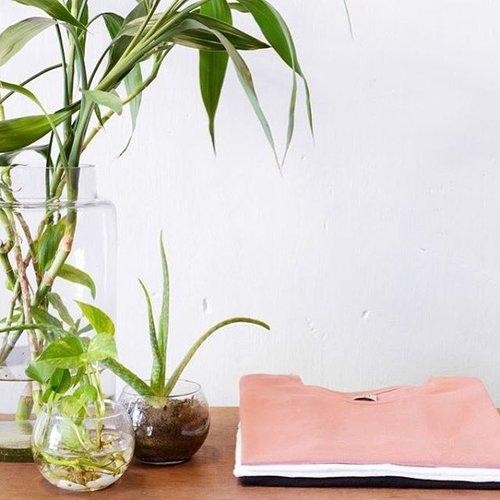 dorsu plant and clothes.jpg