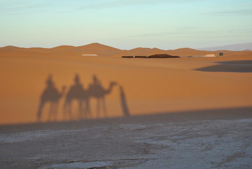 camel shadow.jpg