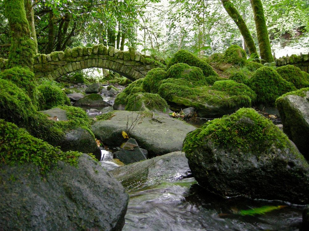 ireland mossy forest bridge.jpg