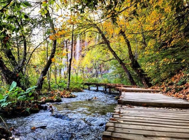 fall boardwalk.jpg