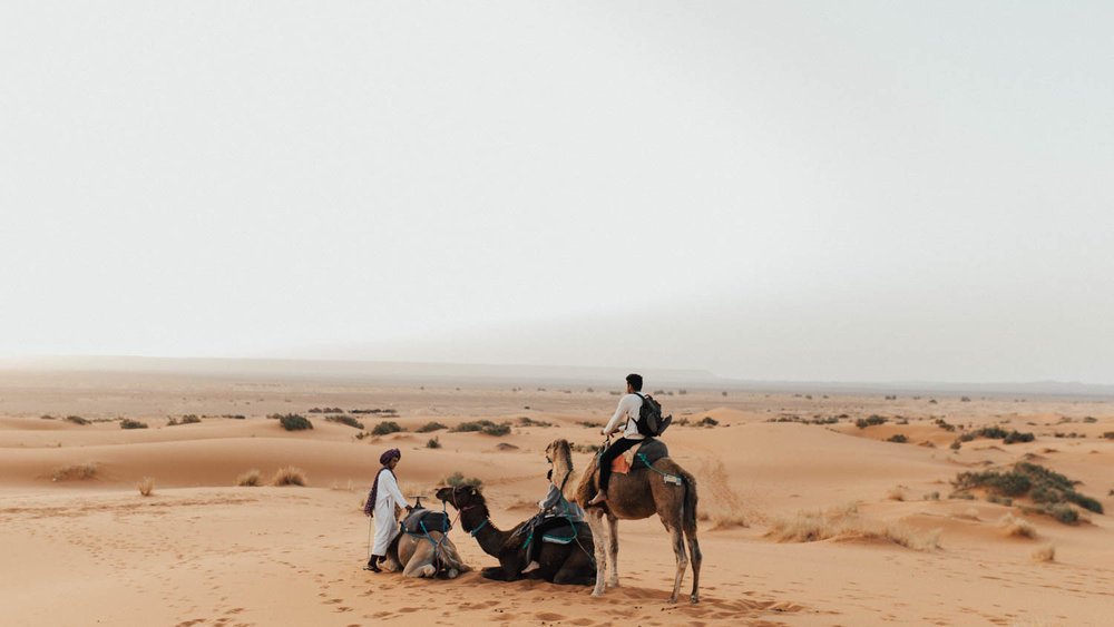 camel2_zephyrandtide.jpg
