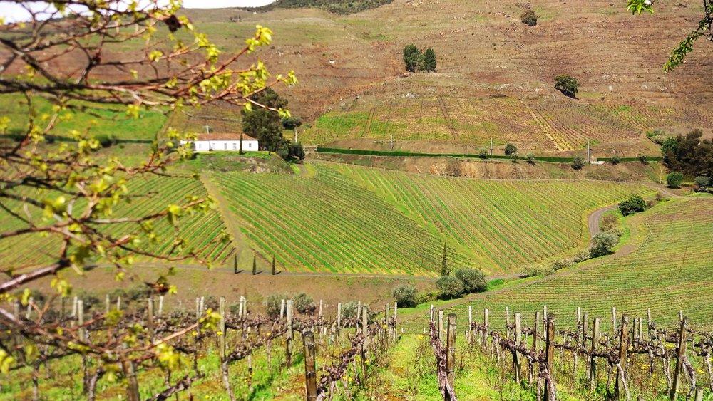 Douro valley green.jpg