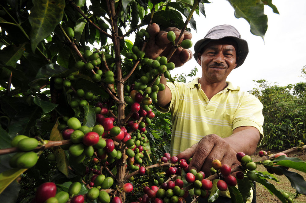 coffee farmer.jpg