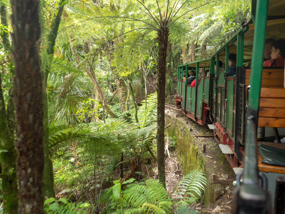 A group excursion in New Zealand's abundant forests on a quirky train ride. Photo: Susanna Kelly.