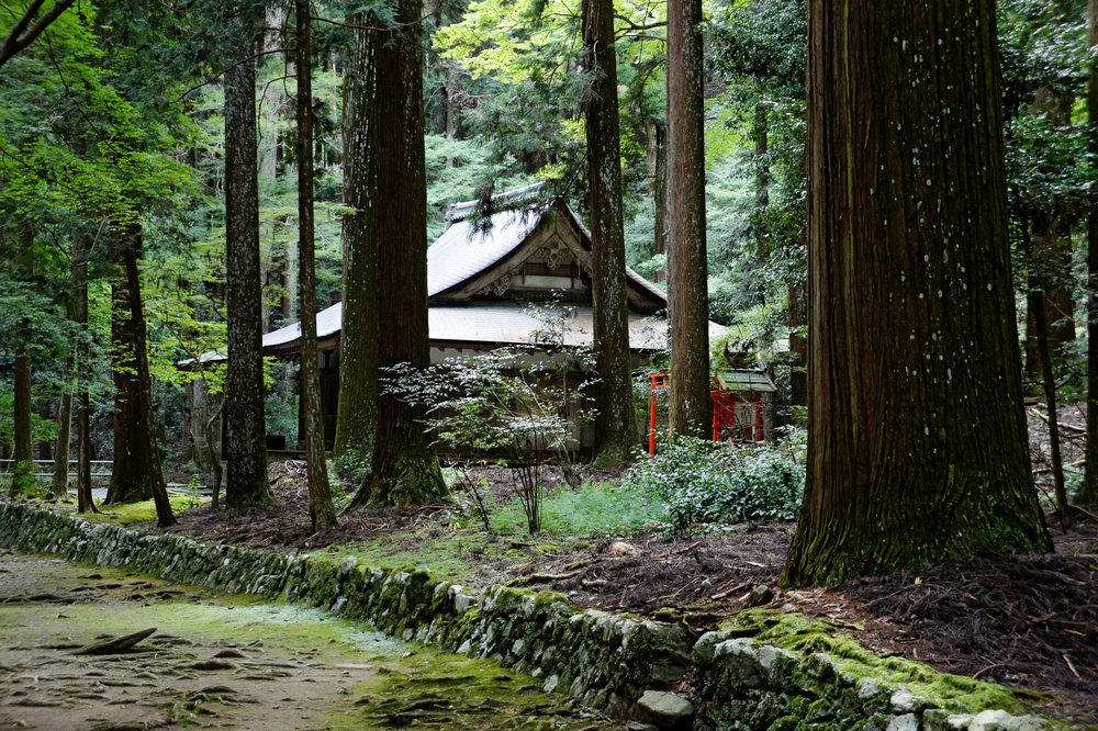 Kozanji_Kyoto_Kyoto11s5s4592.jpg