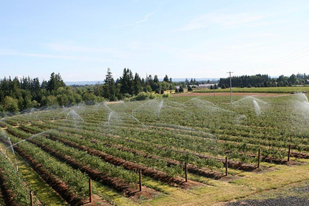 Irrigation2 7.21.2017.jpg