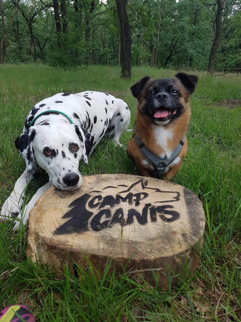 4pföter - VerantwortungCamp Canis verzichtet ganz bewusst auf Rankings, erste Plätze und Zeitmessungen. Der Fokus des Events liegt auf Teamplay, Spaß und dem Überwinden von Grenzen. Wir schätzen Ehrgeiz und Mut, aber reagieren unwirsch, wenn du mögliche Grenzen nicht mit deinem Hund abgesprochen hast.