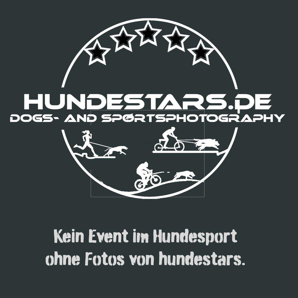 hundestars Homepage.jpg