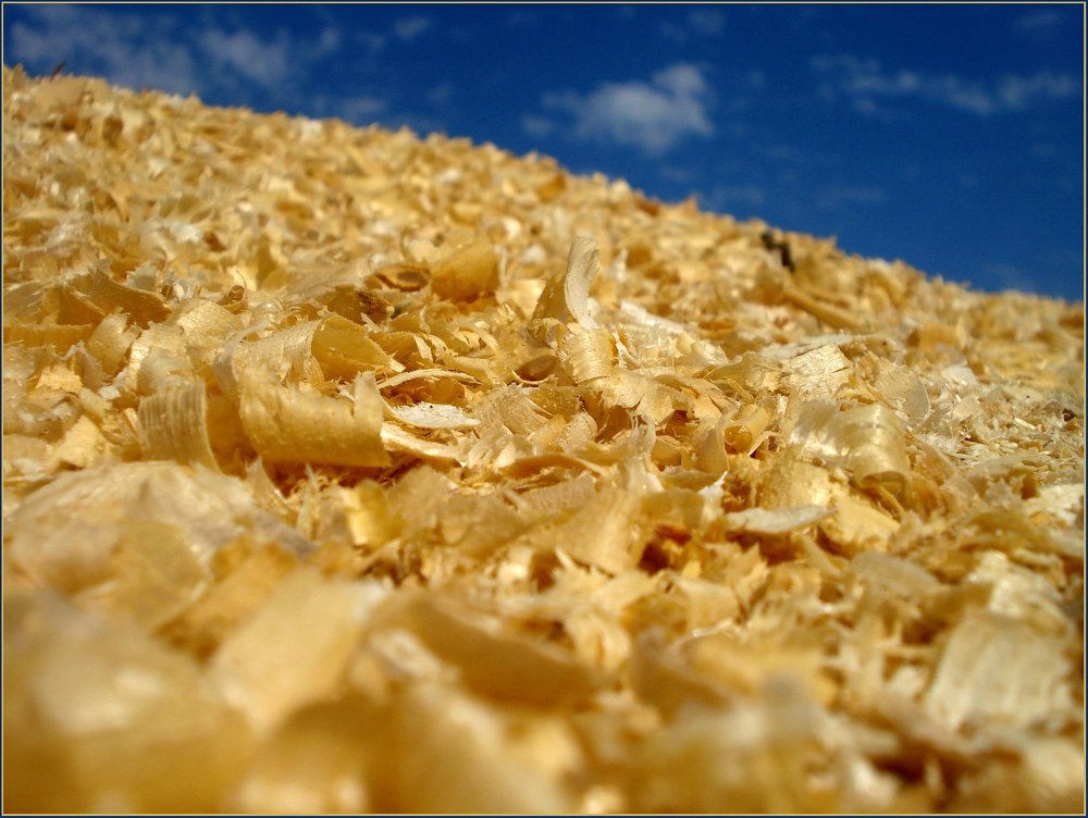 Sawdust - Continuous supply