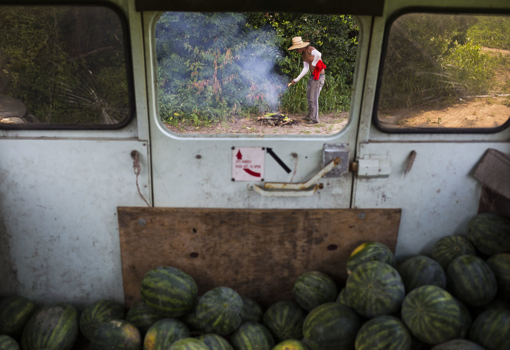 Benjamin Garcia, 25, grabs roasted corn for a quick lunch break as he and his coworkers harvest watermelons into an old school bus along U.S. Route 50 just outside of Mardela Springs, Md., on Saturday, July 28, 2015.