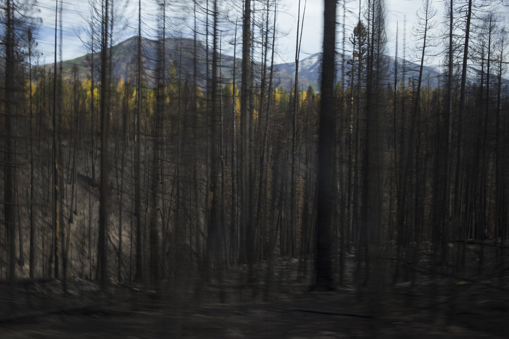 A patch of scorched trees from the Rice Ridge fire are seen just outside of Seeley Lake, Montana., on Thursday, October 19, 2017.