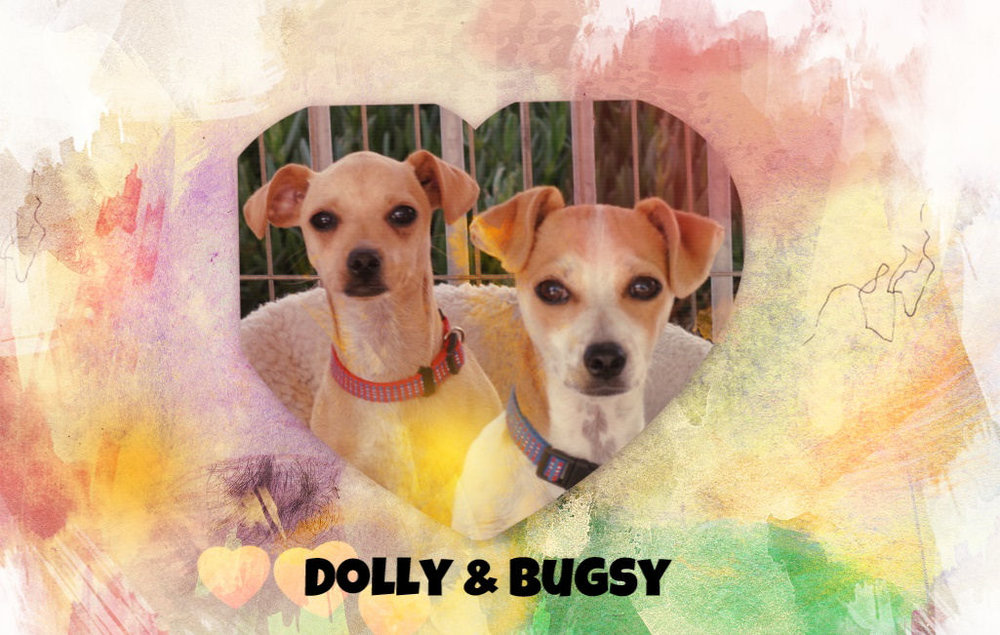 Dolly & Bugsy.jpg