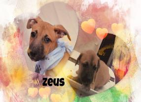 Zeus-286x207.jpg