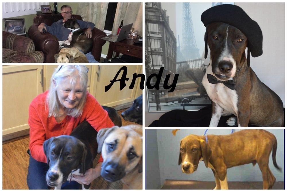 Andy17.jpg