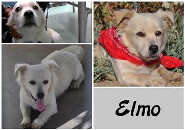 Elmo2-362x254.jpg