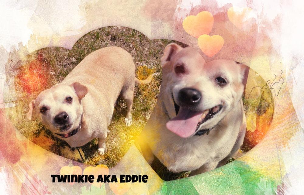 Eddie.jpg