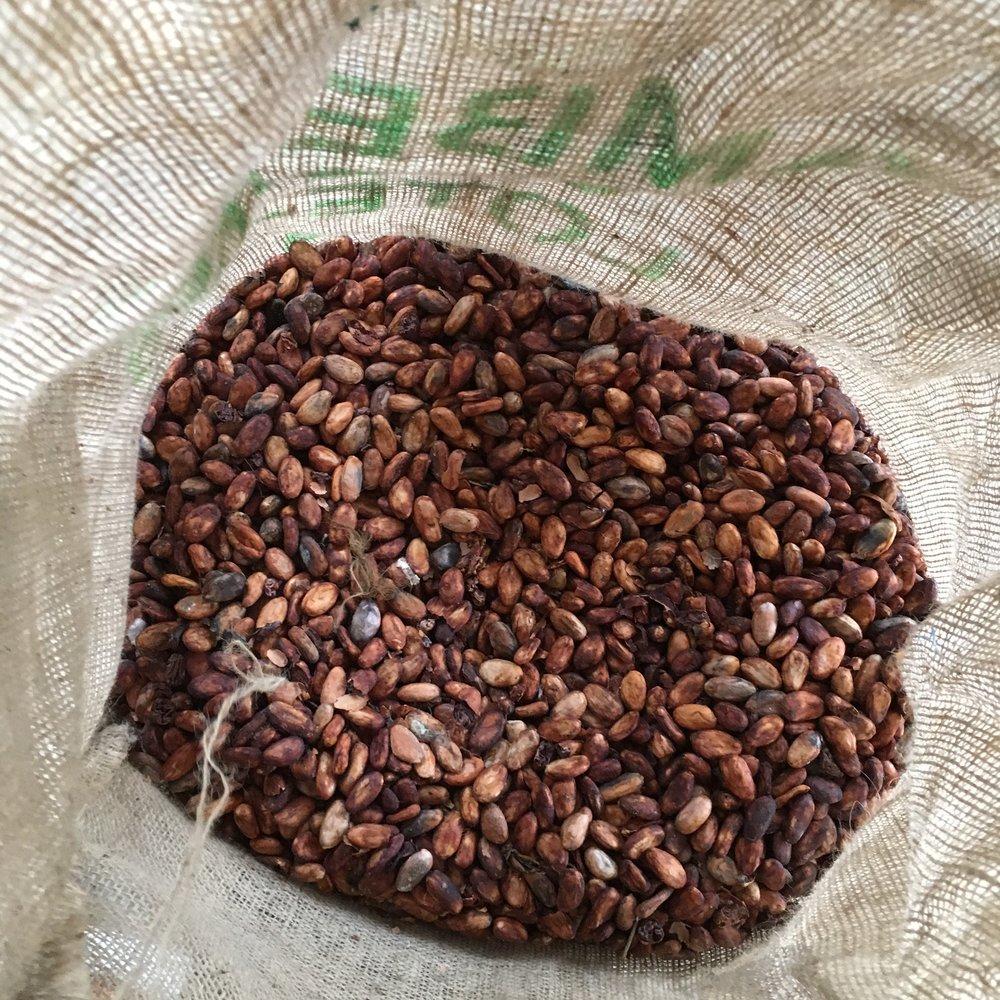 Hacienda San Jose trinitario cacao beans