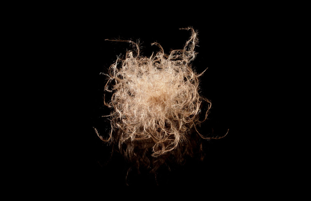 THE FIBERS ON A MATURE EIDERDOWN CLUSTER HAVE MANY TINY HOOKS. THESE HOOKS CAUSE THE CLUSTERS TO CLING TOGETHER.