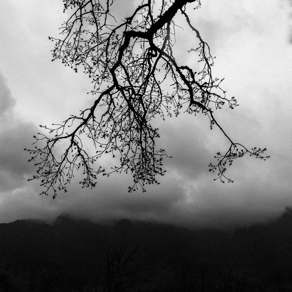 Branch, Beacon Rock State Park, April 2017