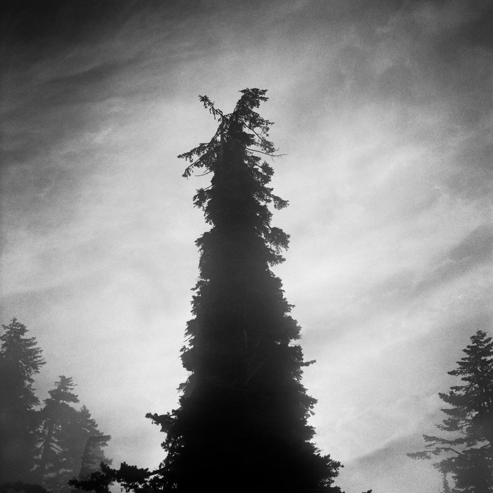 Tree and Fog, Dog Mountain, August 2017