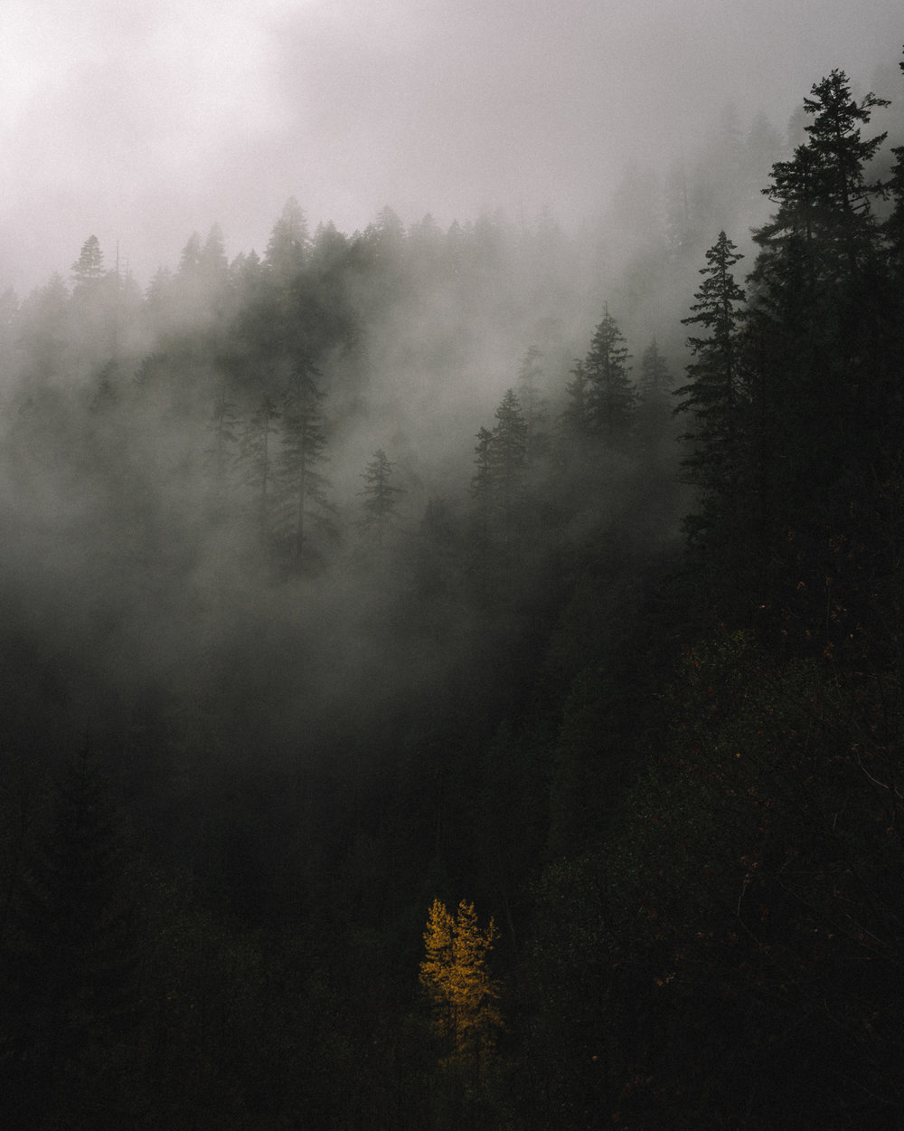 Willamette National Forest, OR, 2016