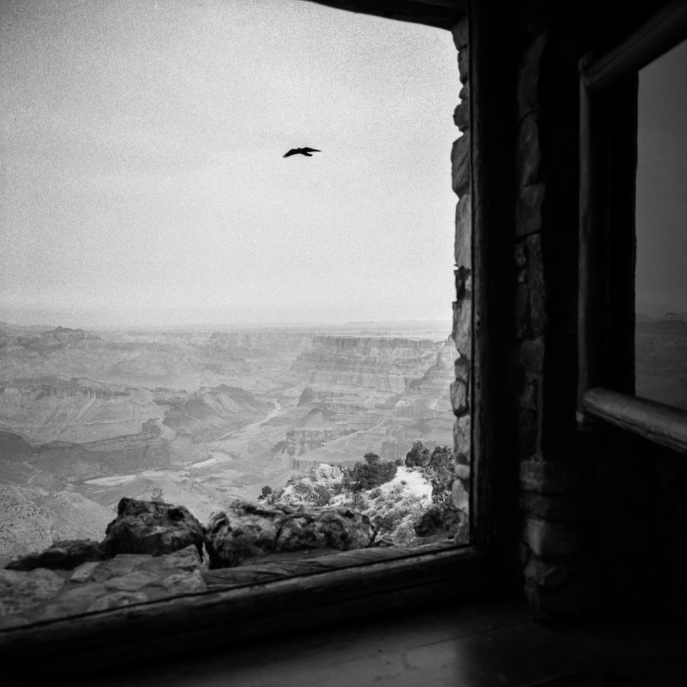 Bird above Grand Canyon, December 2017