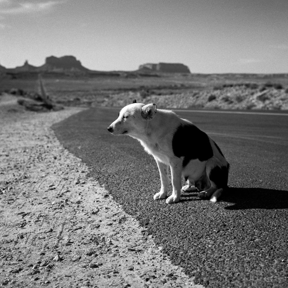 Dog, Monument Valley, December 2017