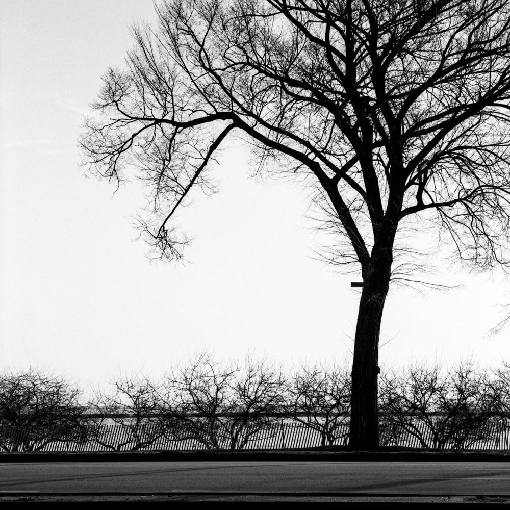 Tree, January 2018