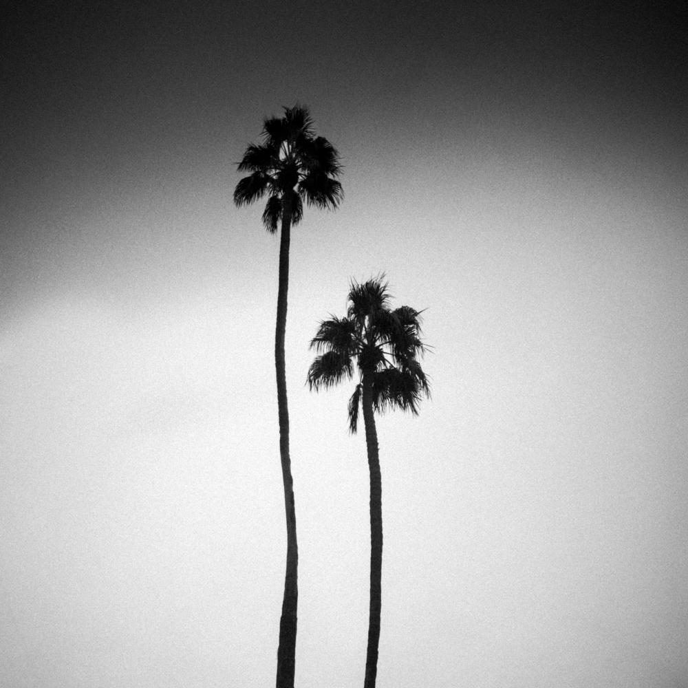 Palms, Palm Springs, November 2017