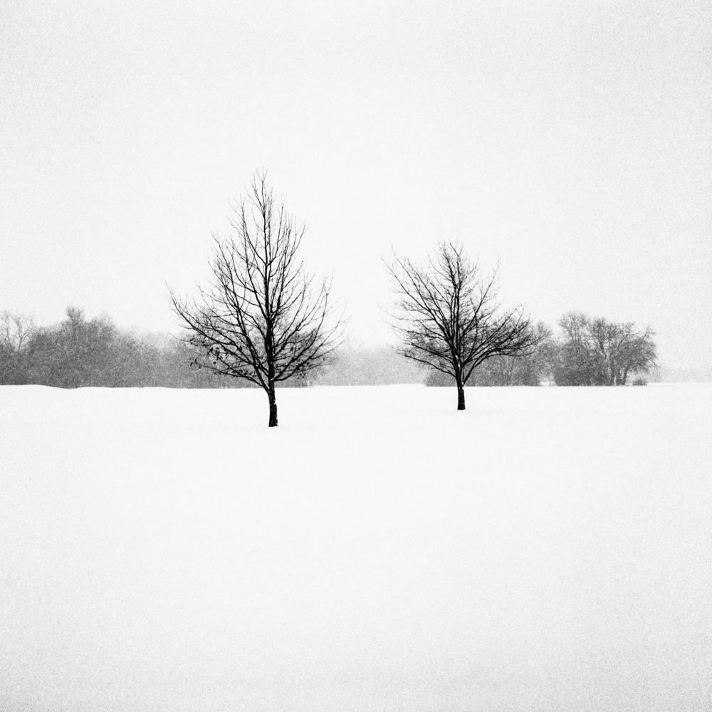 Tree, Indiana, February 2018