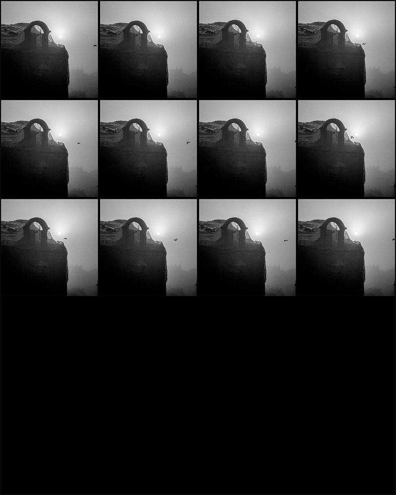 contact-sheet-birds-02.jpg
