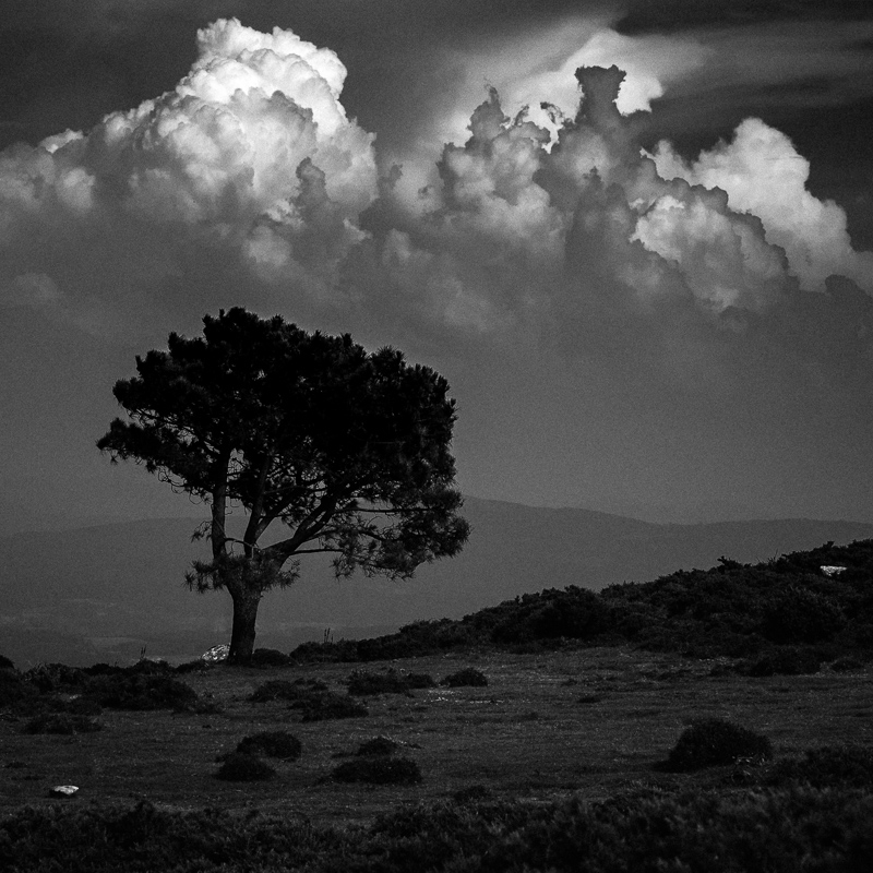 Tree and Clouds, Monte dos Forcados, July 2018