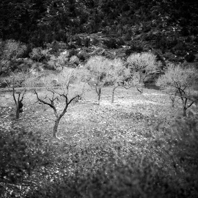 zion national park - 2017