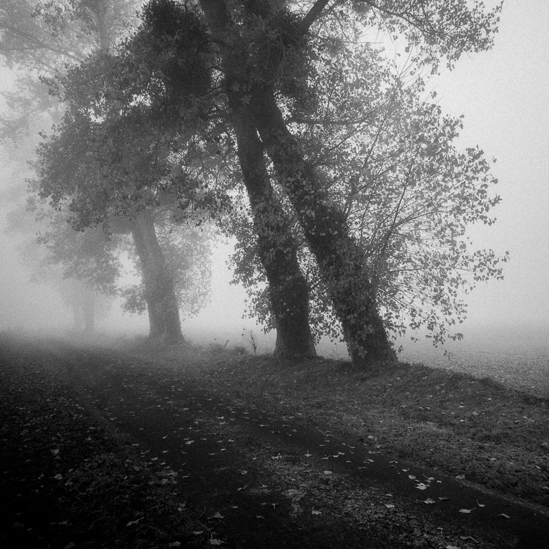 Foggy morning, Normandy, October 2018