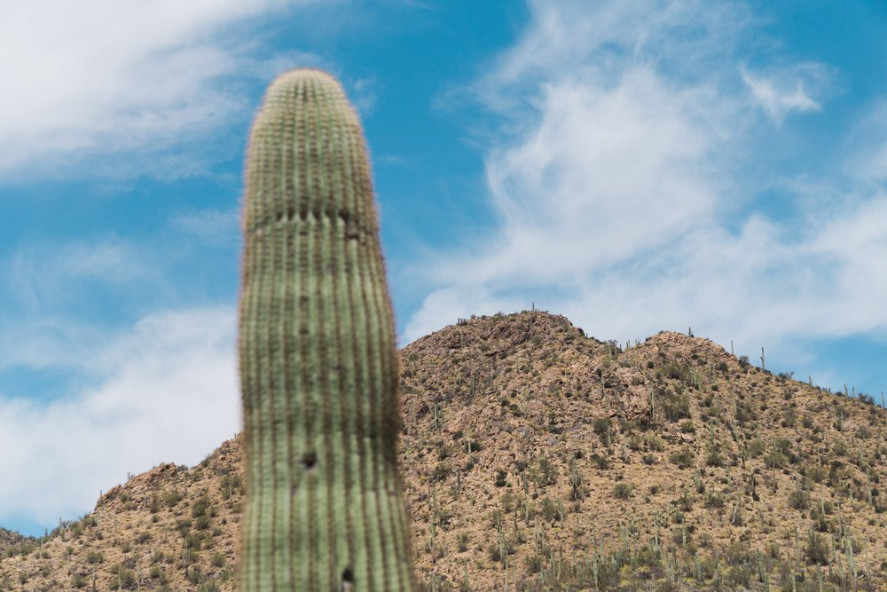 Yet another one in Saguaro National Park
