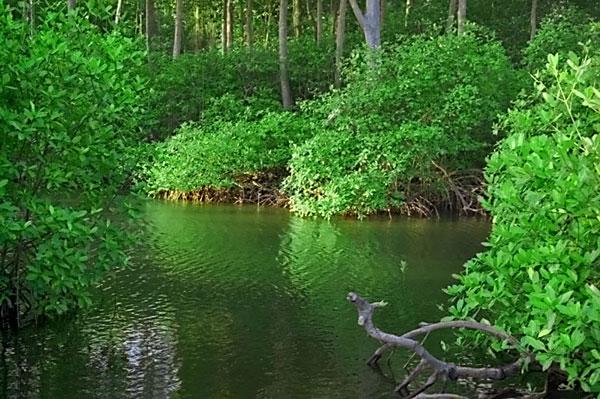may-mangrove3.jpg