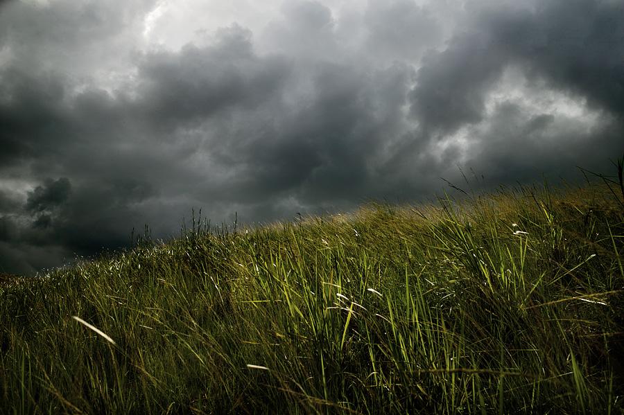grassyhill.jpg