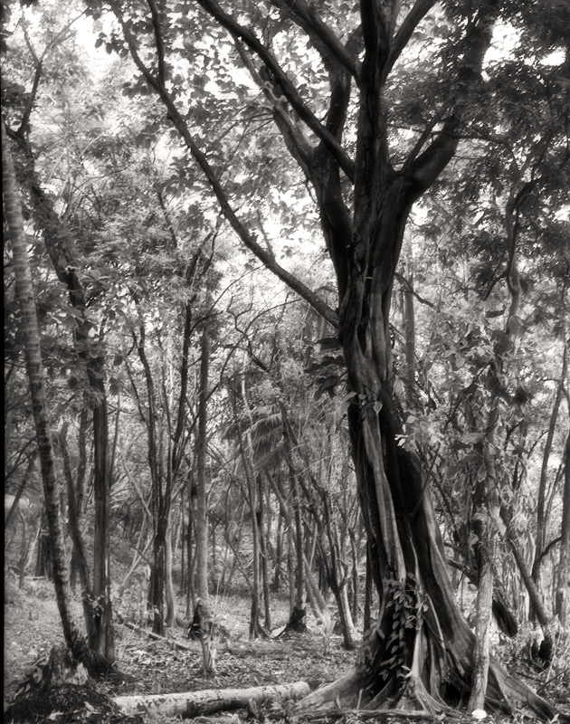 treetoc1.jpg