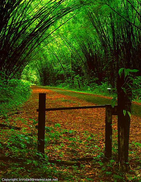 bambootrail4.jpg