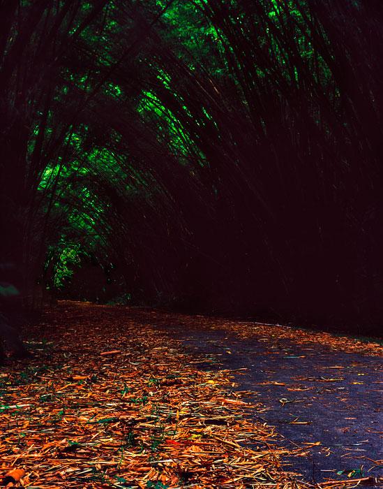 bambootrail6.jpg