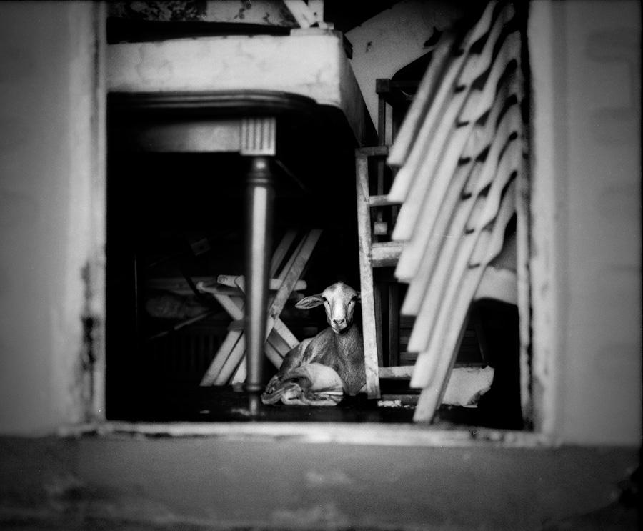 Pentax 67, Ilford Delta 100 film.