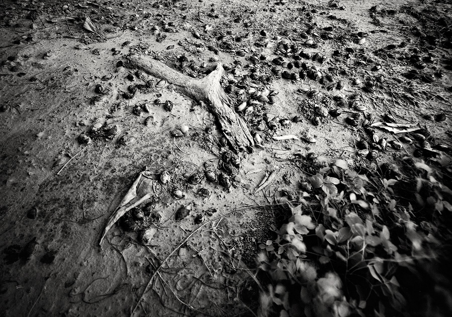 Rollei Retro 4x5 black and white film.