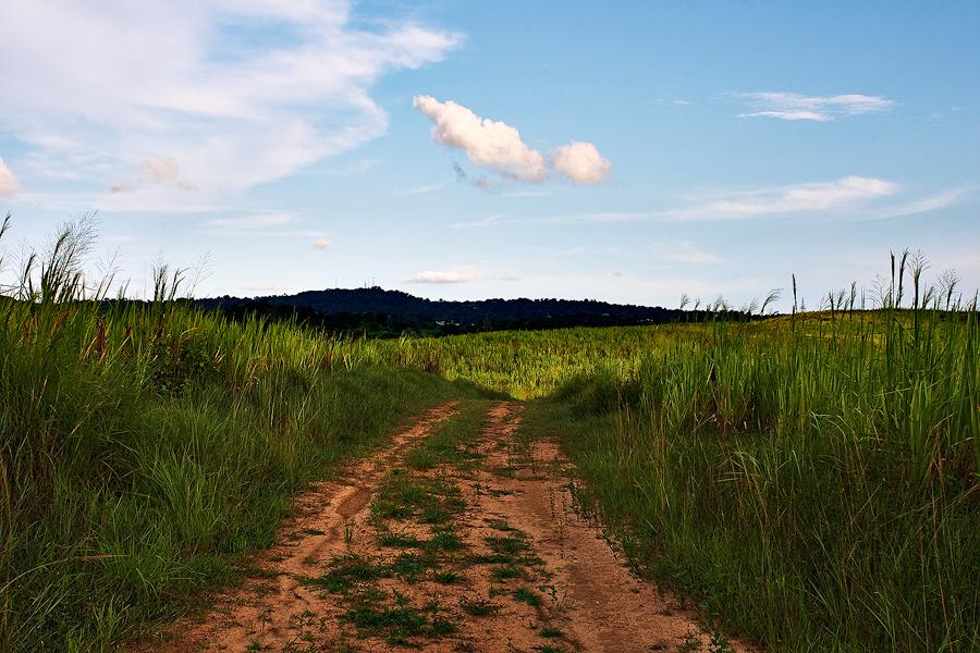 Sugarcane trail, central Trinidad, 2007. Canon 10D.