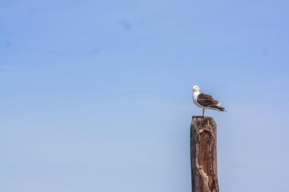 Newport Bird.jpg