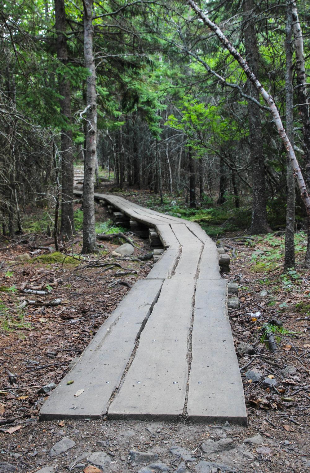 Acadia Trees.jpg