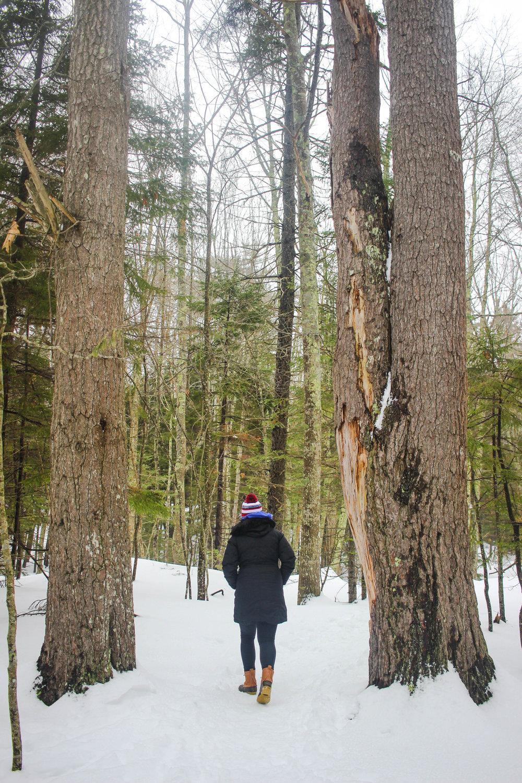Maine Getaway 2018_-88.jpg