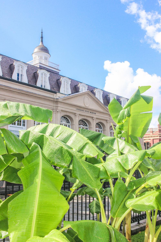 New Orleans Blog_-27.jpg
