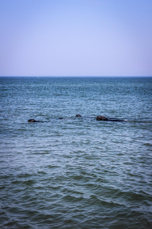 Cape Cod National Seashore TWG_-20.jpg
