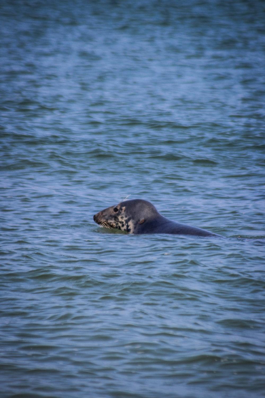 Cape Cod National Seashore TWG_-22.jpg